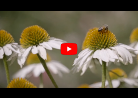 Watch our video about creating an environment for beneficial insects