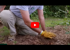 Watch our video about how to improve your soil