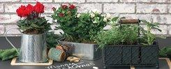 Living Gift Plants