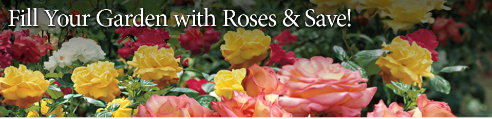 Fill Your Garden with Roses & Save!