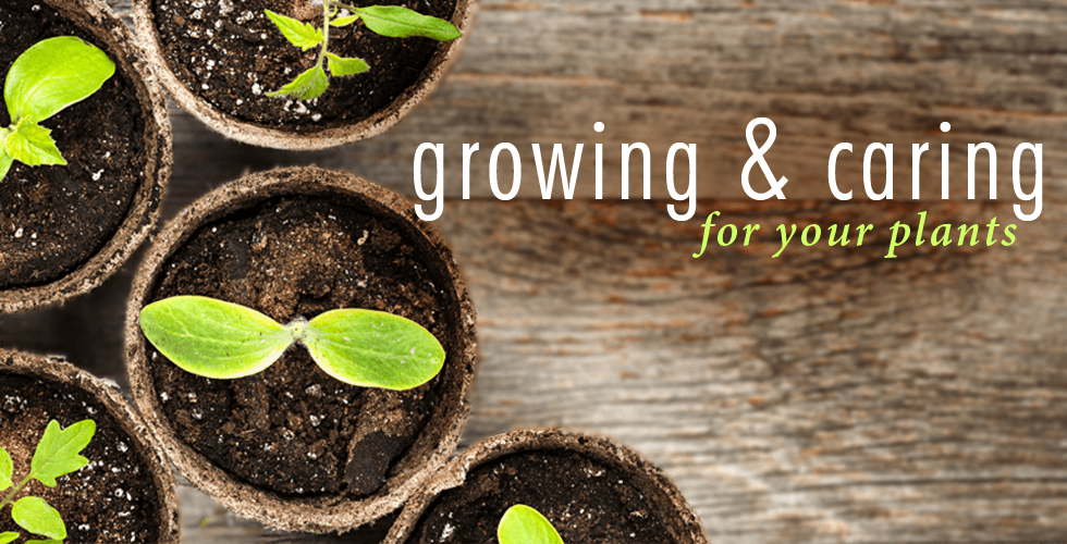 Plant Gardening Tips
