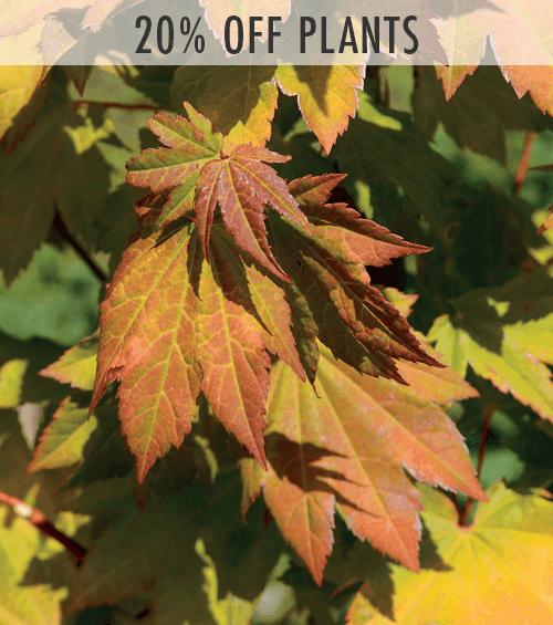20% Off Select Plants