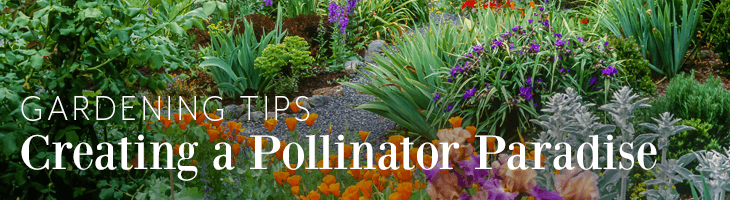 Creating a Pollinator Paradise