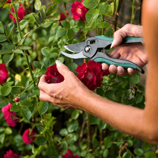 Gardening tips ideas jackson and perkins workwithnaturefo