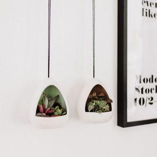 Hanging Mod Pod Succulent Garden