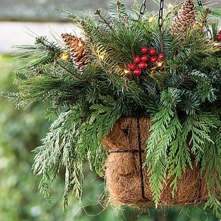 Yuletide Hanging Basket