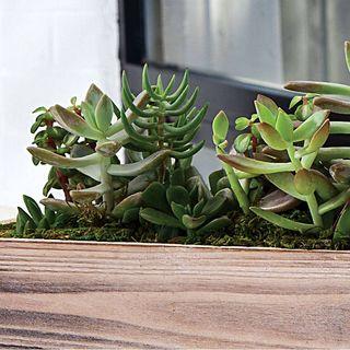Urban Succulent Garden