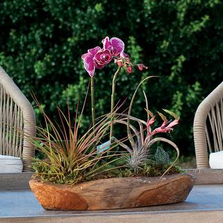 Paradise Orchid Table Garden