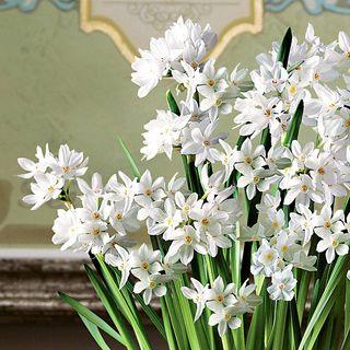Good Good Tidings Paperwhites Bulb Garden