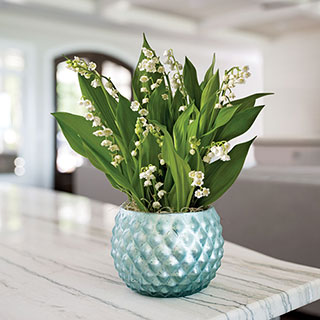 Breezy Lily of the Valley