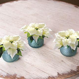 White Poinsettias in Votives