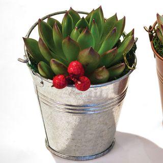 Holiday Metallic Succulent Gift - Set of 2