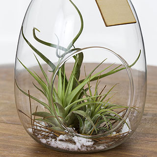 Winter Woods Terrarium