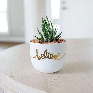 Believe Succulent