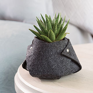 Cozy Fleece Succulent