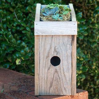 Succulent Garden Birdhouse