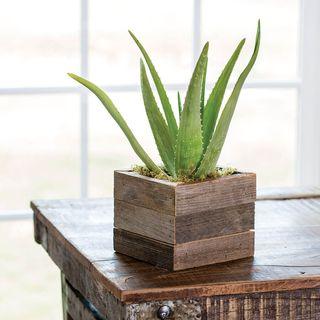 Aloe Vera in Reclaimed Wood