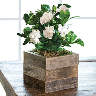 Gardenia in Reclaimed Wood