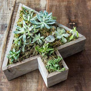 Vintage Succulent Garden