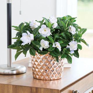 Metropolitan Gardenia