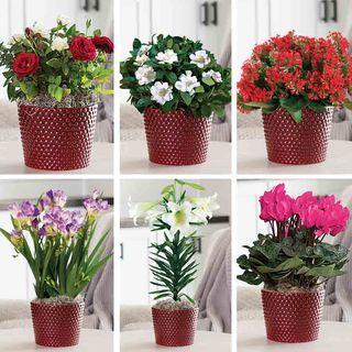 6-Month Plant Club