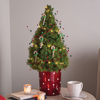 Sweet Traditions Tree Image