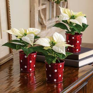 Merry & Bright Poinsettia Trio