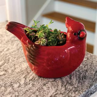 Cheerful Cardinal Succulent Gift