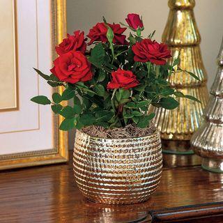 Ravishing Red Rose
