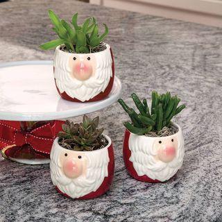 Holly Jolly Succulent Trio