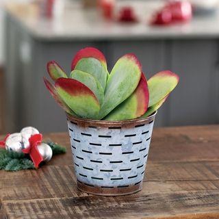 Antique Succulent Gift