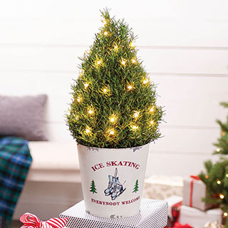 Cozy Rosemary Tree Image