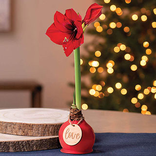 Red Waxed Amaryllis with Love Ornament Image