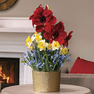 Crimson Wishes Bulb Garden Image