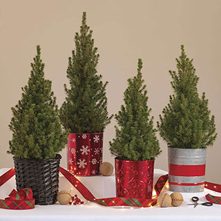 Holiday Spruce It Up Tree Image