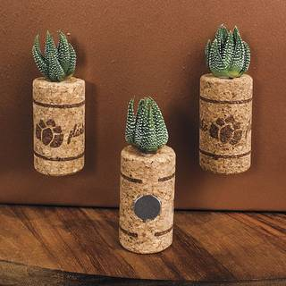 Succulent Gift in Magnetic Wine Cork - Set of 3 Image