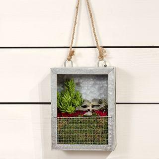 Succulent Plant Portrait - Galvanized Tin