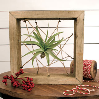 ToTilly Floating Air Plant Image