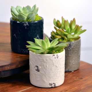 Succulent Gift in Distressed Dolomite - Set of 3 Image