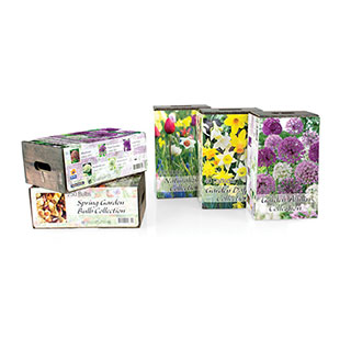 Narcissus Daffodil Garden Box Collection Image