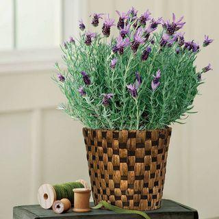 Spring Perfume Lavender Gift Basket