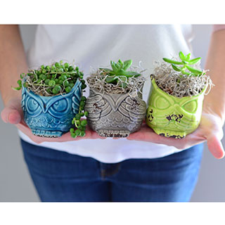 Owl Always Love you Succulents