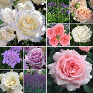 Enchanted Garden Landscape Collection