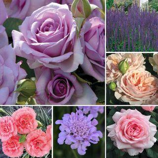 Secret Garden Landscape Collection