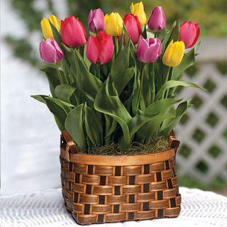 Spring Awakening Bulb Gardenimage