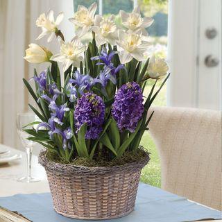 Sun-Kissed Bulb Gardenimage