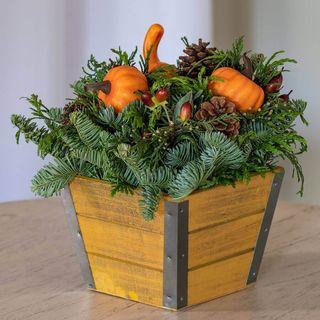 Harvest Evergreen Image