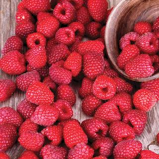 Raspberry 'Latham' Image