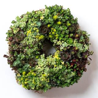 Succulent Wreath Image