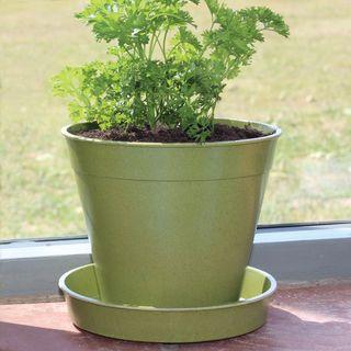 Green Bamboo Pot